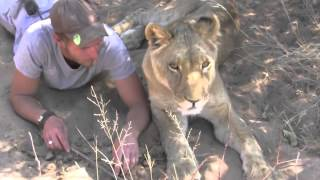 Man is reunited with lion he raised when it was a cub