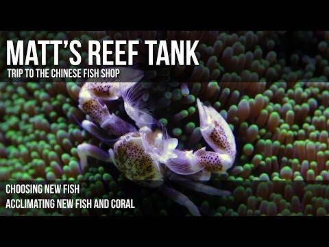 Matt's Reef Tank | Episode 2 | Trip to the Chinese Fish Shop