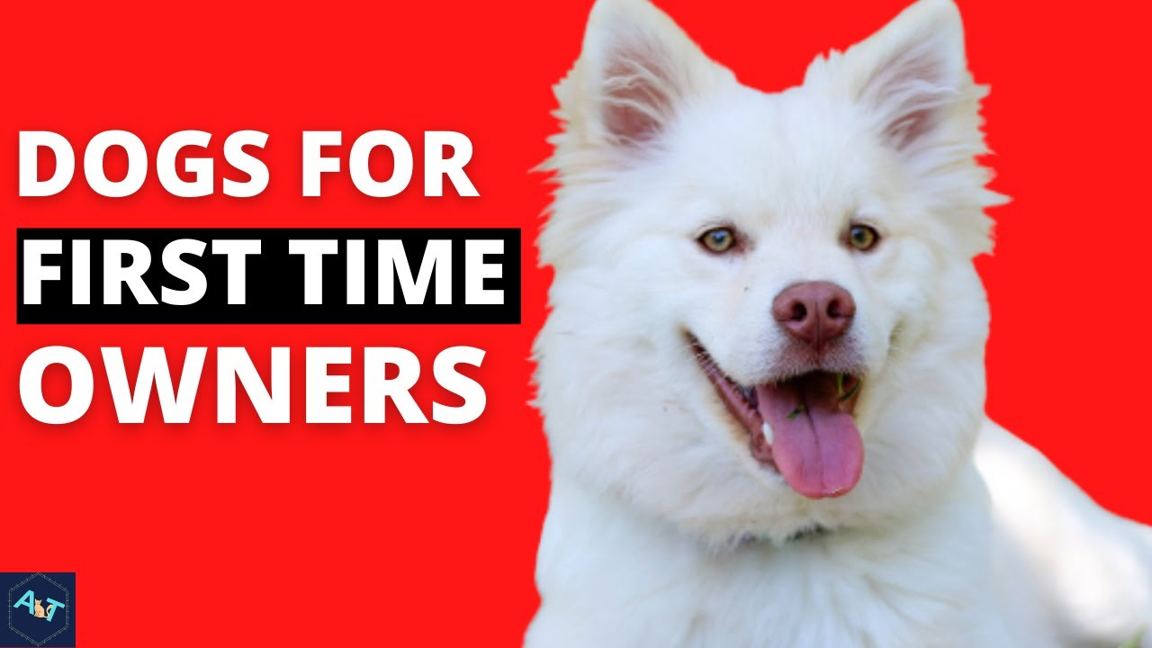 TOP 10 BEST DOG BREED FOR THE FIRST TIME OWNERS | 10 DOGS BREED FOR THE BEGINNERS