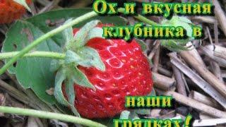 Клубника в умных грядках! Planting strawberries in smart beds!(Клубника, ну кто откажется отведать# клубнику из