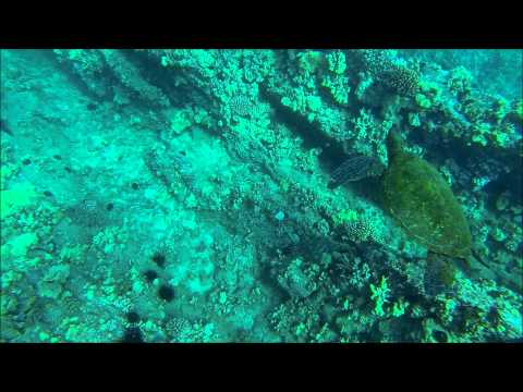 Freediving Molokini Crater and Turtle Town