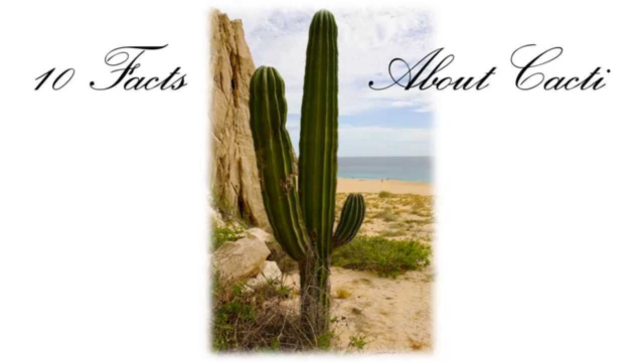 10 Facts About Cacti