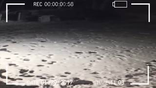 A strange mysterious creature shot at night on a security camera!