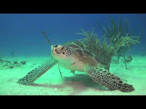 Lily Underwater Adventures Log ( Green Turtle ) Ocean Explorers Dive Center