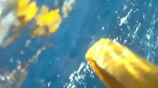 Черепаха-режиссёр(, 2010-06-17T11:40:51.000Z)