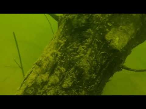 Scuba Diving Shasta Lake, California  - 1st Dive