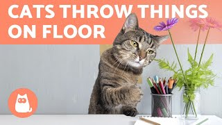 My Cat THROW THINGS on the FLOOR ❗ WHY?