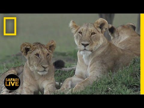 Safari Live - Day 69 | National Geographic