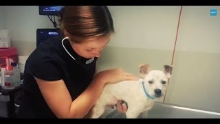 RSPCA NSW Short Tails - Vet Services