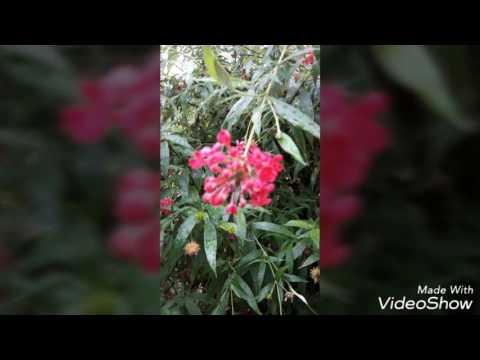 Queen elizabeth Botanical garden Cayman