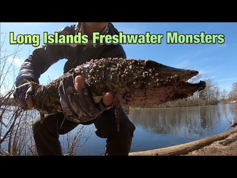 Freshwater Lure Fishing Long Island NY Spring 2019 Multi Species