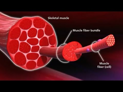 Know Your Muscle, Grow Your Muscle GeorgeHealth.com