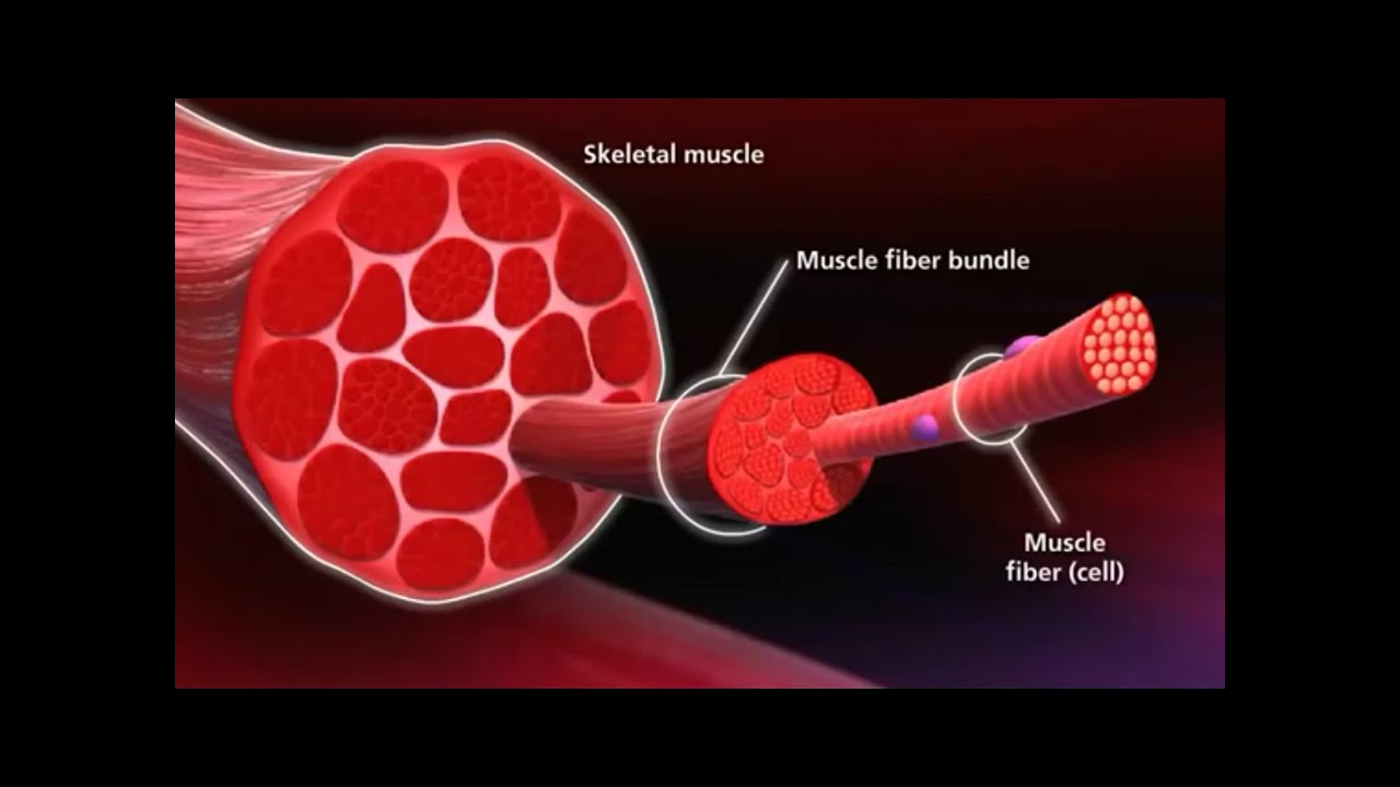 Muscle grow after workout
