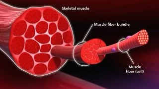Know Your Muscle, Grow Your Muscle - George Health