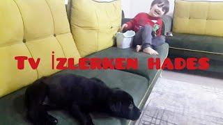 Gambar cover Yeni Köpeğimiz Hades Bu Köpekcik Çok Oyuncu