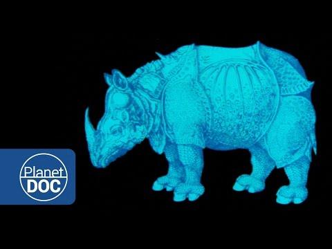 The Unicorn of India. Indian Rhinoceros | Nature