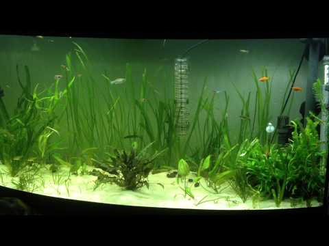 Flucal Vicenza 260L Freshwater Aquarium 1 Year on