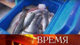 Красная рыба и икра в этом году подешевели почти вдвое, доложил президенту глава Росрыболовства.