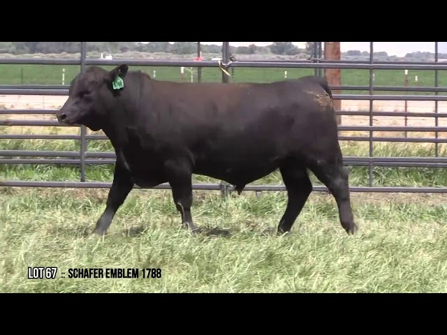 Mid Valley Bull Sale Lot 67