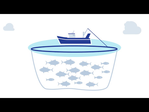 Fish Aggregation Devices: A Big Talking Point In The World Of Fishing