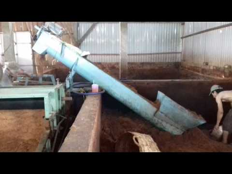 Quy trình xử lý mụn dừa tại cơ sở Cocoisland