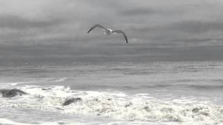 Ocean waves and Seagulls flying above ~ Hilton Head Island, South Carolina
