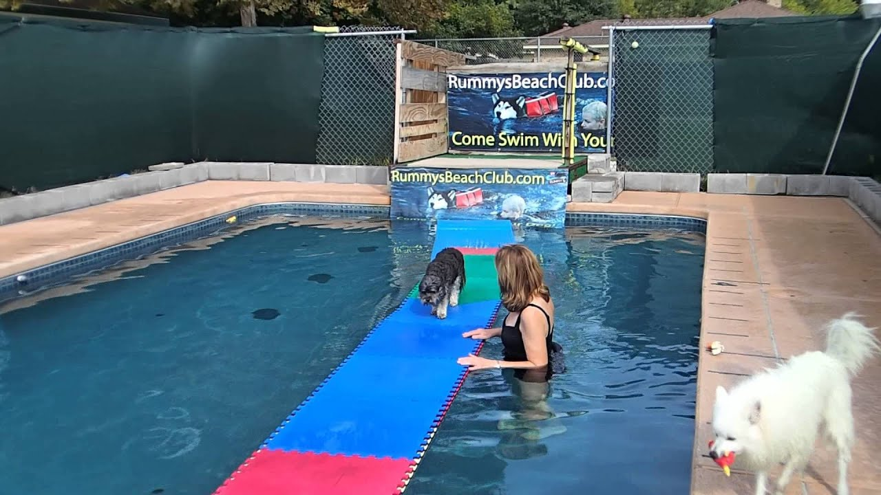 15 yo Poodle mix Dancer walks on swimming pool floats great