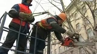 видео Санитарная обрезка деревьев