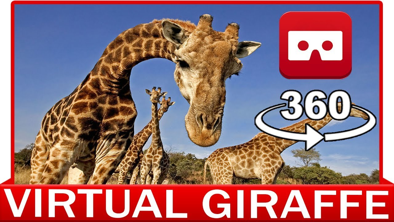 360° VR VIDEO - GIRAFFE - AFRICA - SAFARI - DISCOVERY ANIMAL & NATURE - VIRTUAL REALITY 3D