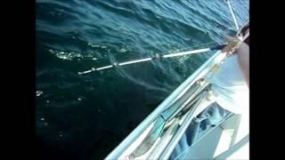 Deep sea fishing maine portland for Deep sea fishing maine