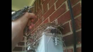 HOW TO CATCH A BABY BIRD!!!!