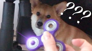 Реакция собаки на СПИННЕР😐