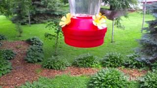 Hummingbird And Woodpecker At Feeder - © Kip Ladage