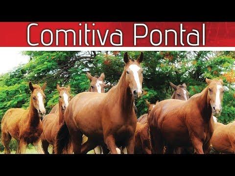 Lote de Cavalos
