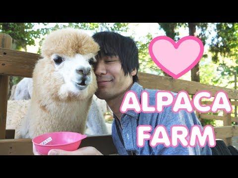 We find love at an alpaca farm
