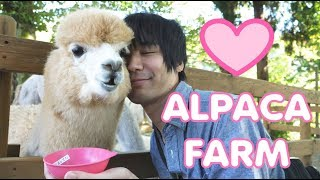 We find love at an alpaca farm