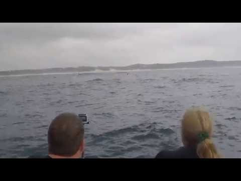 Humpback Whales, Aliwal Shoal, South Africa and Ponta D'Ouro, Mozambique