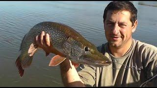 Рыбалка на щуку, серия 2(Это видео о рыбалке на щуку в летнюю жару. Видеокамеры на которые я снимал рыбалку Panasonic HC-V700 GoPro hero 3+ Мои..., 2016-09-28T11:29:29.000Z)