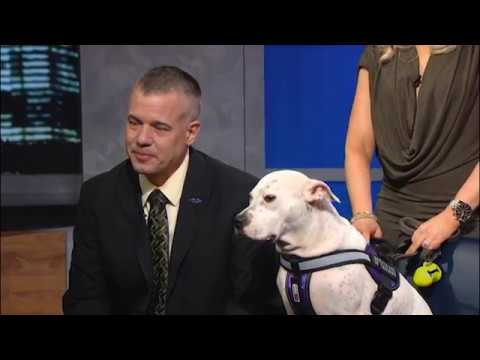 """Richard Robitaille and Tami Pichardo from Berkeley College's Office of Military and Veteran Affairs appeared on the public TV show """"One-on-One with Steve Adubato"""" with Skyla."""