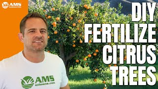 DIY How To Use Citrus Tree Fertilizer Spikes