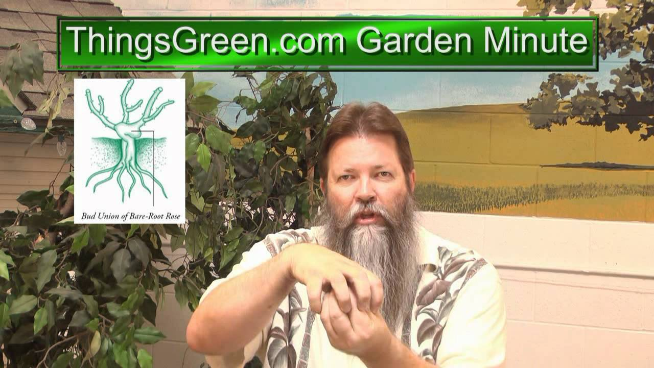 Weeds around the Roses - Things Green Garden Minute with Nick ...