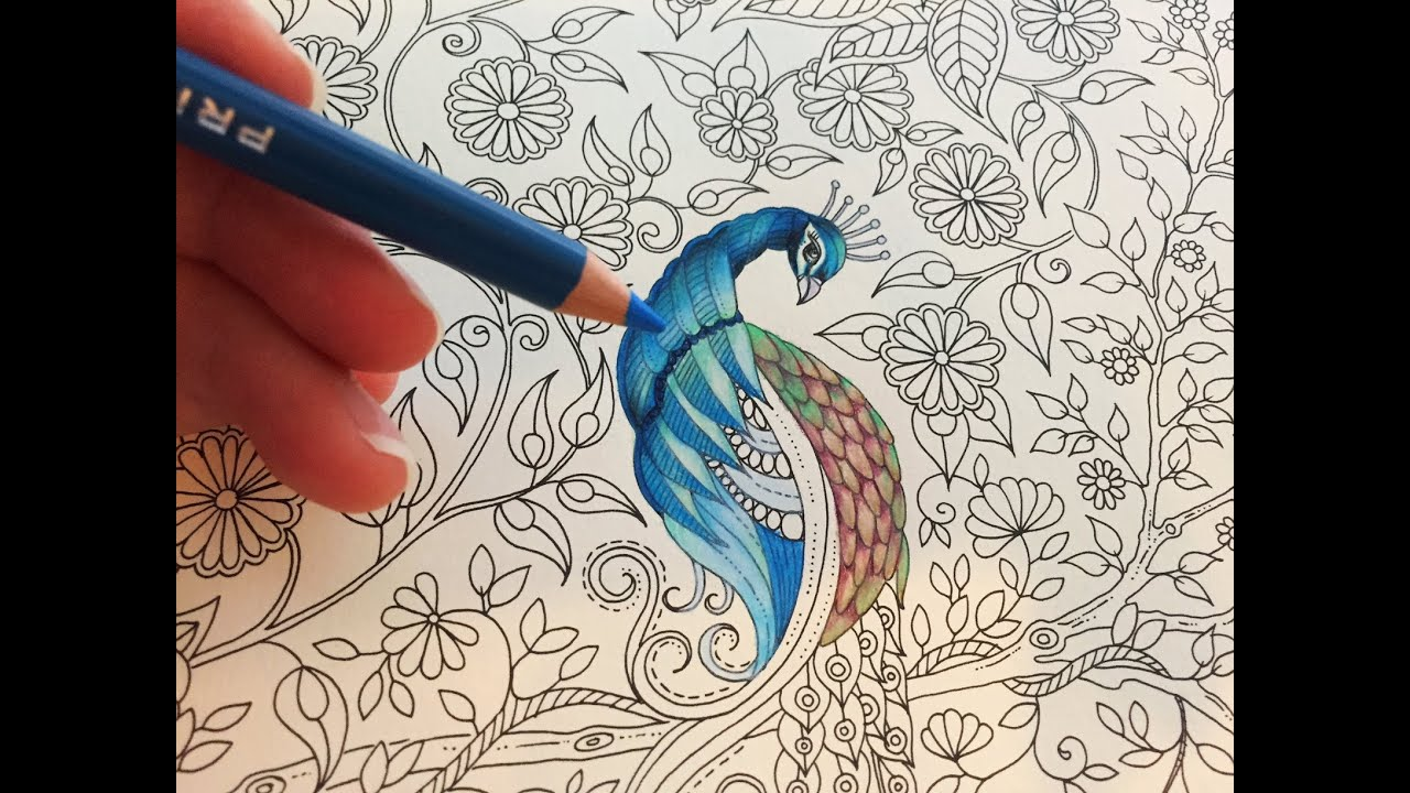 Colored Pencils For Grown Up Coloring Peacock Part 13 Secret Garden Adult Coloring Book