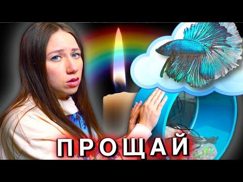 УМЕР НЕМО в