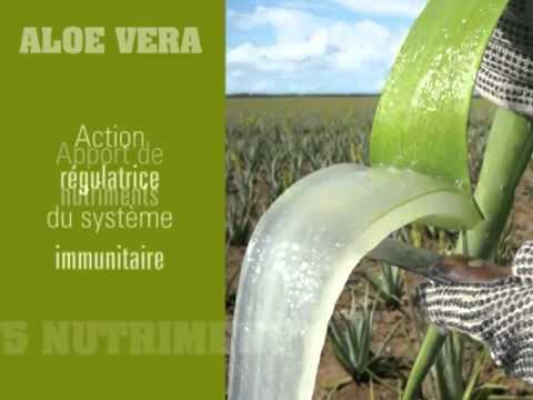 Tout savoir sur l Aloe Vera YouTube - YouTube 27859890c7c5