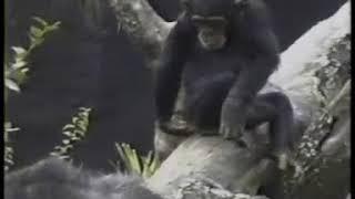 Funny videos of kenya(30)