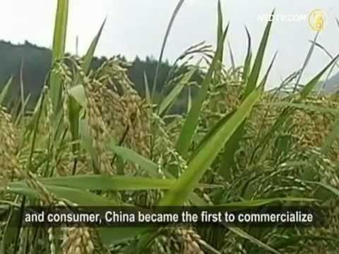 Expert: GM Food Will Destroy China 转基因食品 专家:亡国灭种 (W/ English Sub)