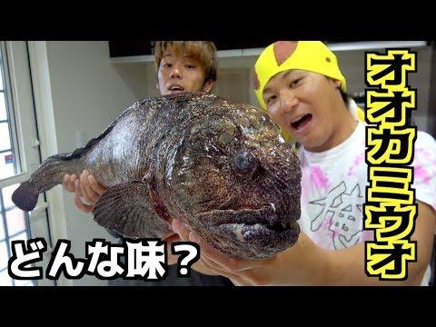 北海道で釣れたオオカミウオを捌いて食べてみた#7