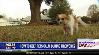 How to Keep Pets Calm During Fireworks