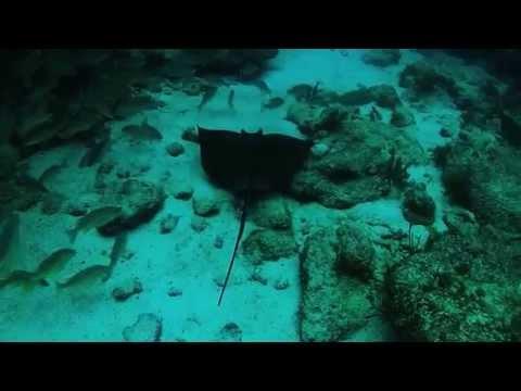 Scuba Diving Molasses Reef in Key Largo, Fl