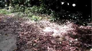 butterflies in cuc phuong national park vietnam